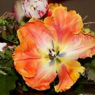 Queen of Tulips by vbk70