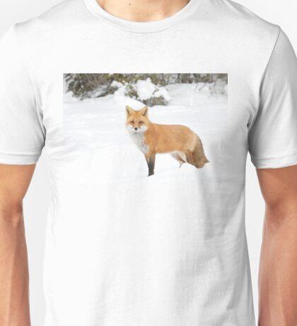 Red Fox - Algonquin Park Unisex T-Shirt