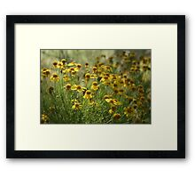 Yellow Wildflower Patch Framed Print