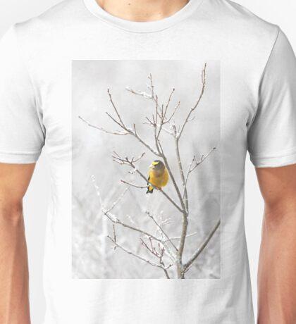 Evening Grosbeak - Algonquin Park T-Shirt