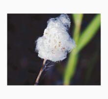 Milkweed Fluff  Kids Tee