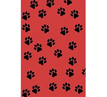 Paw Prints Photographic Print