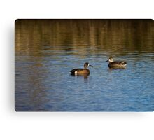 Blue-Winged Teal Pair Canvas Print