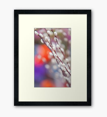 Easter Willow Branch of White Furry Catkins Framed Print