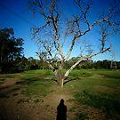 Shadow and Tree by AleksCanard