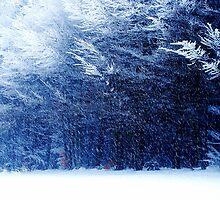 Snowy blue Forest by Imi Koetz