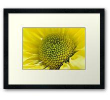 yellow daisy macro Framed Print
