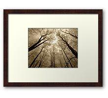 Foggy Trees Framed Print