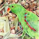 Eclectus parrot by Aakheperure