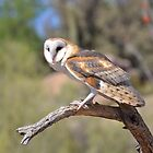 Barn Owl Perched by Kathleen Brant