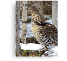 Posing in Nature Canvas Print
