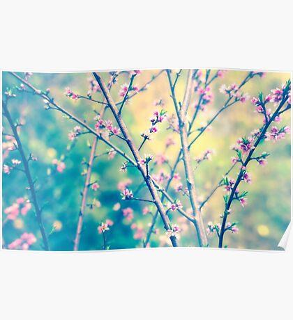 The Garden in Spring Poster