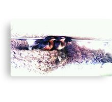 Three Baby Birds Canvas Print