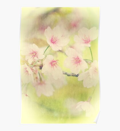 Dreamy Faded Vintage Pale Pink Sakura Cherry Blossoms Poster