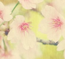 Dreamy Faded Vintage Pale Pink Sakura Cherry Blossoms Sticker