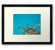Sea Turtle Swimming in the Caribbean Framed Print