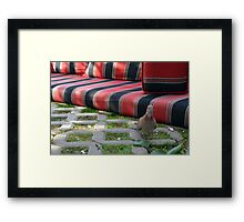 Pigeon next to mattress in the park. Framed Print
