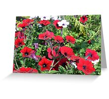 Beautiful red flowers in the park. Greeting Card