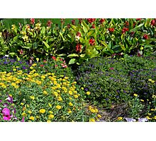 Many colorful flowers in the garden. Photographic Print