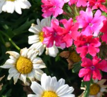 Colorful pink and white flowers in the garden. Sticker