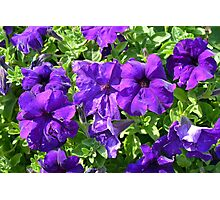 Purple flowers pattern. Photographic Print