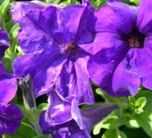 Purple flowers pattern. Sticker