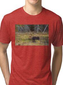 Bull Moose, Algonquin Park Tri-blend T-Shirt