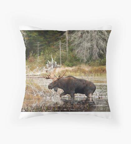 Bull moose - Algonquin Park Throw Pillow