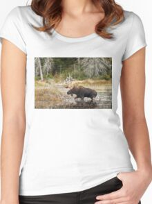 Bull moose - Algonquin Park Women's Fitted Scoop T-Shirt