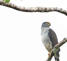 Bicolored Hawk - Costa Rica Sticker