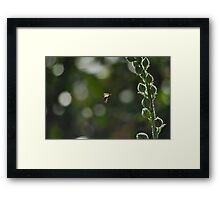 Wasp captured while flying around flowers Framed Print