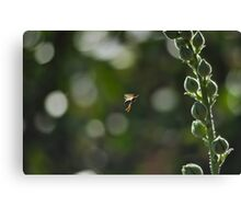 Wasp captured while flying around flowers Canvas Print