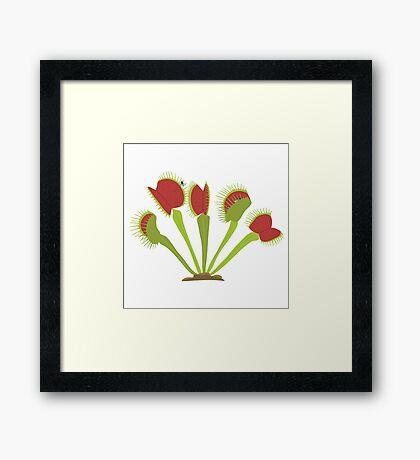 Venus Flytrap Framed Print