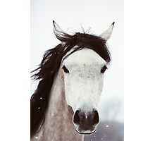 Winter Horse Photographic Print