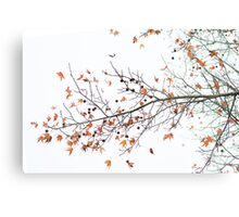 Orange Leaves and Gumballs Metal Print