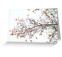 Orange Leaves and Gumballs Greeting Card