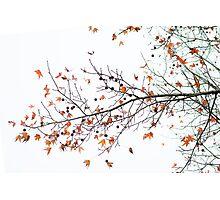 Orange Leaves and Gumballs Photographic Print