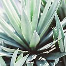 Agave by Jessica  Lia