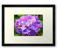 Hydrangea Dreams  (All Sales Proceeds Donated for Cancer Research) Framed Print