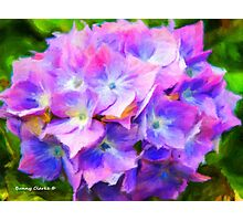Hydrangea Dreams  (All Sales Proceeds Donated for Cancer Research) Photographic Print