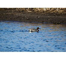 Green-Winged Teal Drake Photographic Print