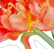 Peachy Tulips Sticker