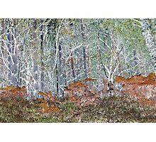 Woodliness Loveliness Photographic Print