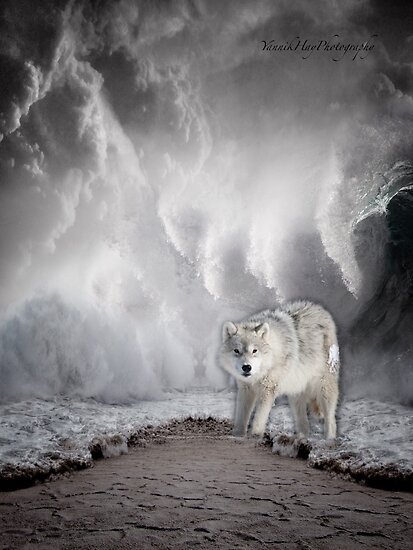 Wolf in the Middle of a Storm by Yannik Hay
