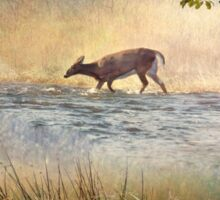 White Tail Deer Touting the Water - Parc National Mont Tremblant Sticker