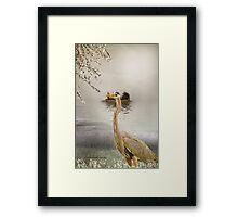Great Blue Heron at Dusk Framed Print