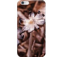 Glistening Inky Cap Mushrooms - Coprinus Micaceus iPhone Case/Skin