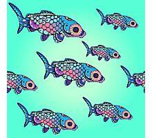 Rainbow Fish Photographic Print