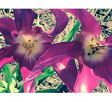 Flower Cell Phone Cover Photographic Print