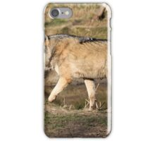 The Eurasian wolf (Canis lupus lupus) iPhone Case/Skin